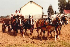 horse drawn carriage at farming expo