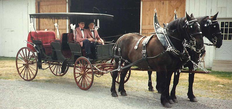 Carriage Insurance
