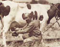 LGM Dairy Insurance - man milking a cow