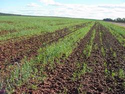 Bad Crops Mean Low Profit