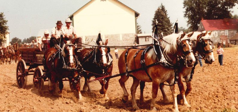 taking rate - horse and carriage liability insurance