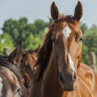 equine mortality insurance - horses