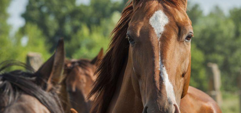 equine mortality insurance - horses