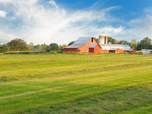 blanket policy - dairy farm