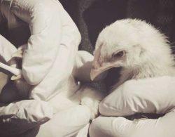Avian Flu Insurance