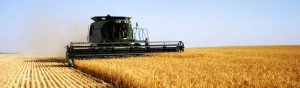 field crop insurance - harvester in wheat field