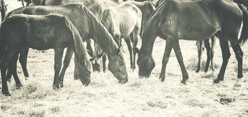 Horse Farm Insurance
