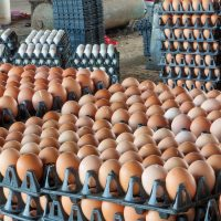 avian flu - stacks of eggs