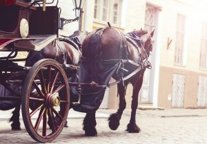 horse and carriage insurance
