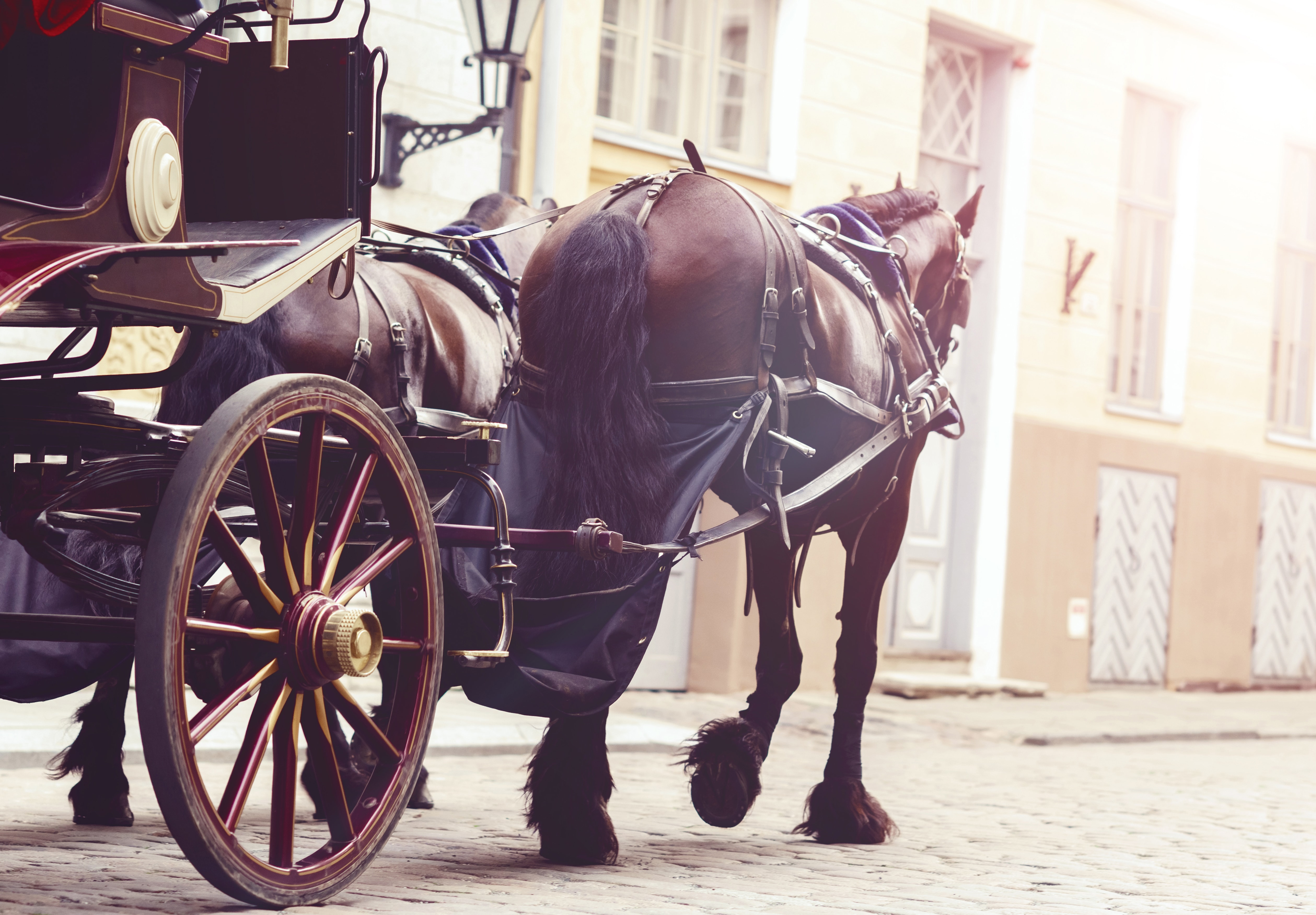 Why You Need Horse and Carriage Insurance