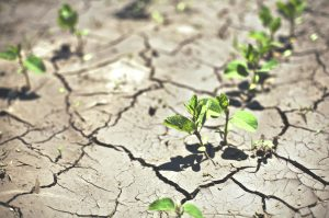 crop insurance drought