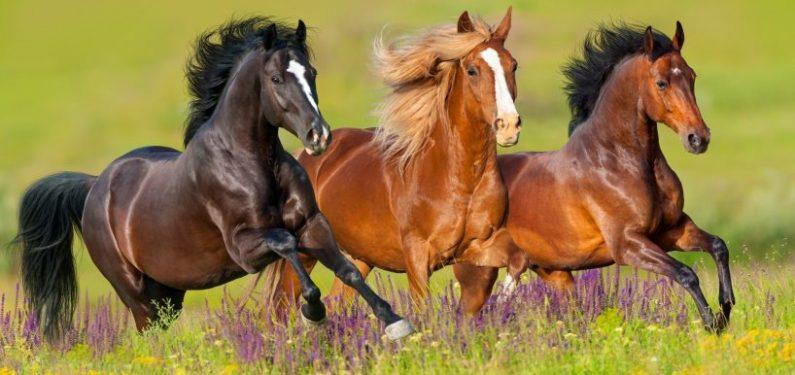 three horses running through a meadow