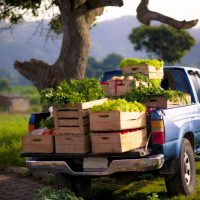 blue pickup truck with crates of vegetables in the bed