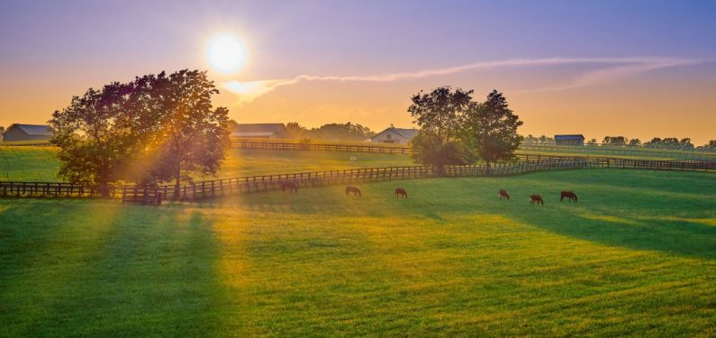 horse farm - horses grazing in a field at sunset