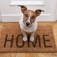 dog sitting on a home welcome mat