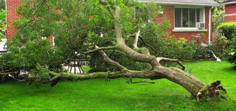 fallen tree in backyard